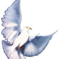 Dove without Background Thumbnail